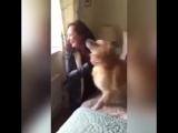 Собака встретилась с хозяйкой после 7 месяцев