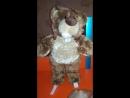 Бурый польский миша