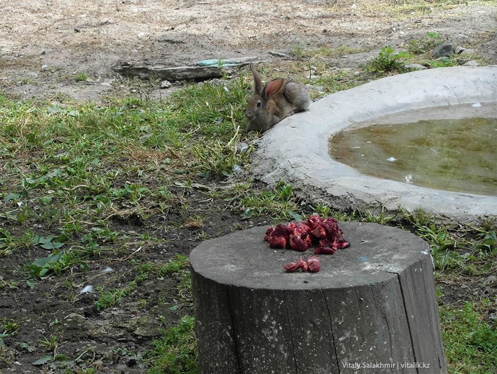 Кролик в клетке ястребов, зоопарк Алматы 2018
