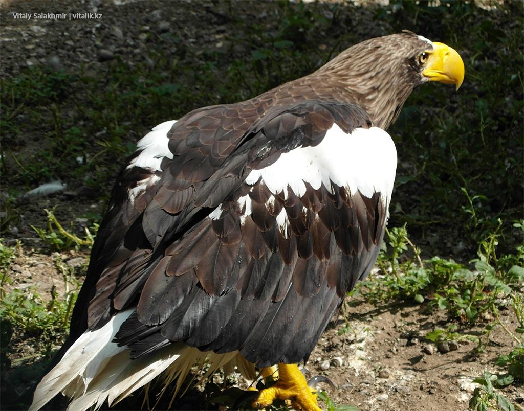 Крупная хищная птица, зоопарк Алматы 2018