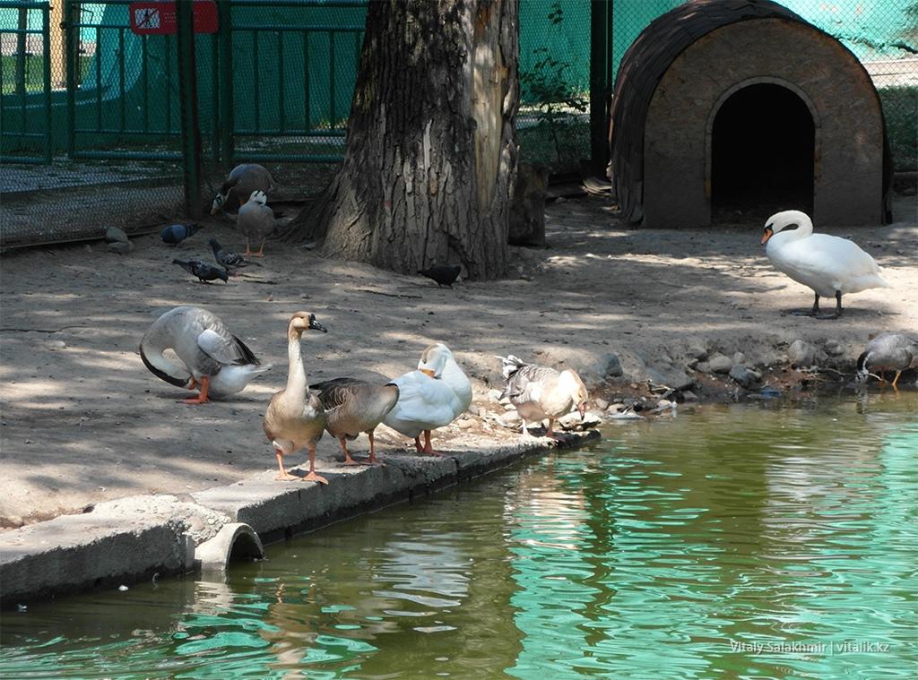 Пруд с птицами, зоопарк Алматы 2018