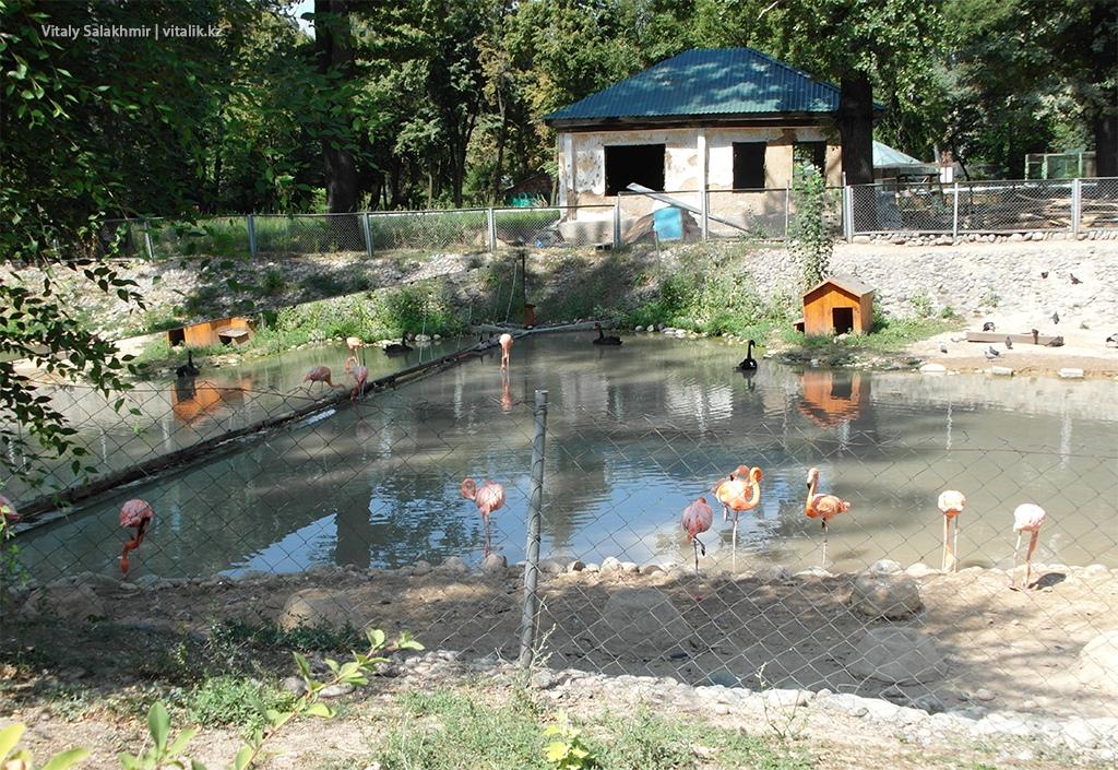 Пруд с фламинго, зоопарк Алматы 2018
