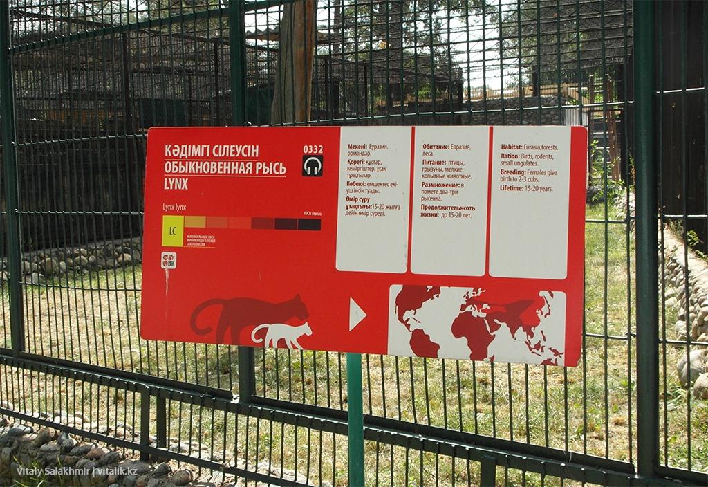 Клетка рыси в алматинском зоопарке 2018