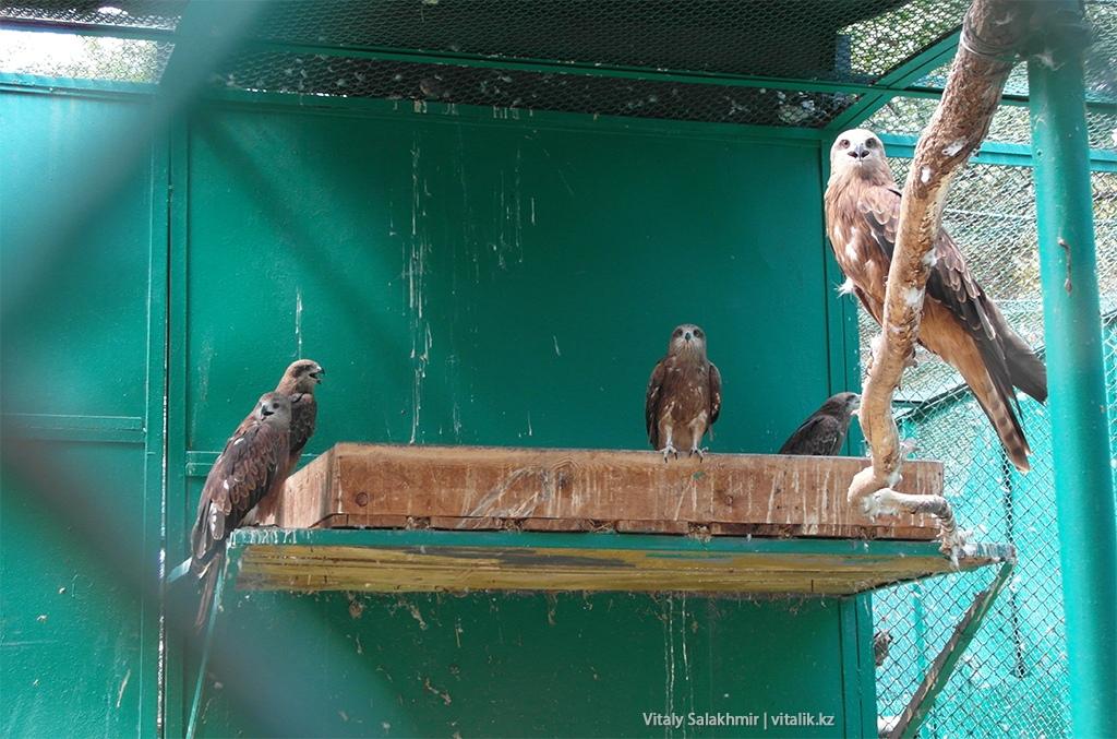 Хищные птицы в зоопарке Алматы 2018