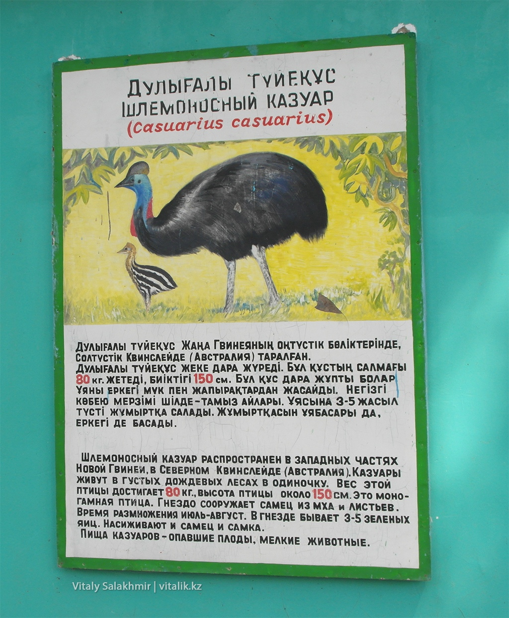 Шлемоносный казуар, табличка на клетке, зоопарк Алматы 2018