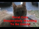 Watch The Effect Microwave Frequencies Has On Trees, Aphids, Feral Cats
