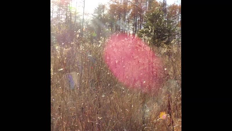 осень пылинки и лепестки летят