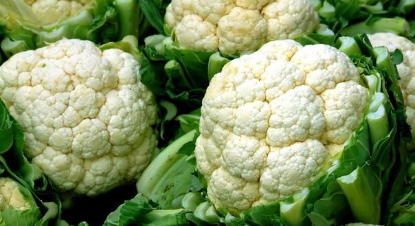 «Я много лет выращиваю белокочанную капусту и получаю хорошие урожаи. А в прошлом году попробовала посадить цветную капусту, но получить большие головки не удалось. Головки выросли совсем