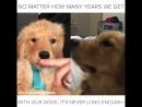 Неважно, сколько лет отмерено нашим собакам - этого всегда слишком мало...
