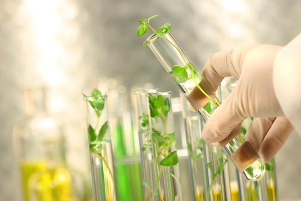 Особенности применения инсектицидов на основе бактерий Биологическая защита растений это не искоренение вредных видов, а регуляция их численности, так называемый биологический контроль.