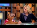 ALF Sits Down Tries to Behave for GMA Interview