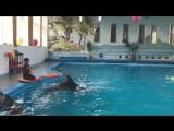 Игра и плавание с дельфином