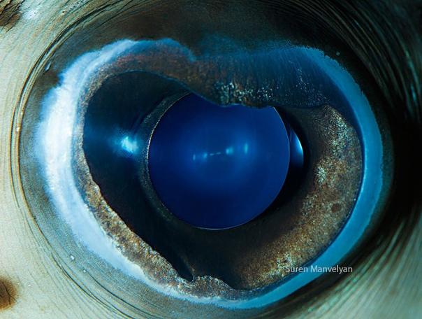 Глаза рыб и пресмыкающихся Его знаменитые фотографии зрачков глаз облетели весь мир, а недавно серия этих работ была номинирована на крупнейшем международном фотоконкурсе Sony World Photography