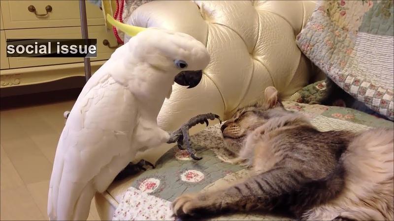 앵무새가 웃긴 동물인 이유 ㅋㅋㅋㅋㅋㅋ 2018 웃음참기