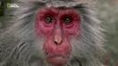 Nat Geo Wild: Тайны дикой природы. Серия 3. Затерянные миры (1080р)