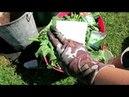 ОГУРЦЫ в бачках с гидрогелем / Как вырастить огурцы без обильного полива