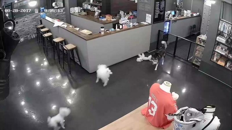 Среди собак тоже встречаются те, которые обижают маленьких