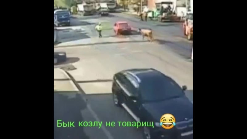 Бык козлу не товарищ