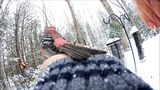Ewan Dobson - To Touch a Pine Grosbeak Red Squirrel