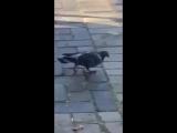 This is golub'
