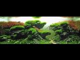 САМЫЕ КРАСИВЫЕ АКВАРИУМЫ. АКВАСКЕЙП (часть1). The most beautiful aquariums. Aquascape.mp4