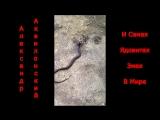 Александр Аквилонский и Самая Ядовитая Змея в Мире