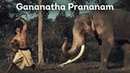 Gananatha Prananam Elephant Salutation Vidyut Jammwal Chuck Russell Junglee