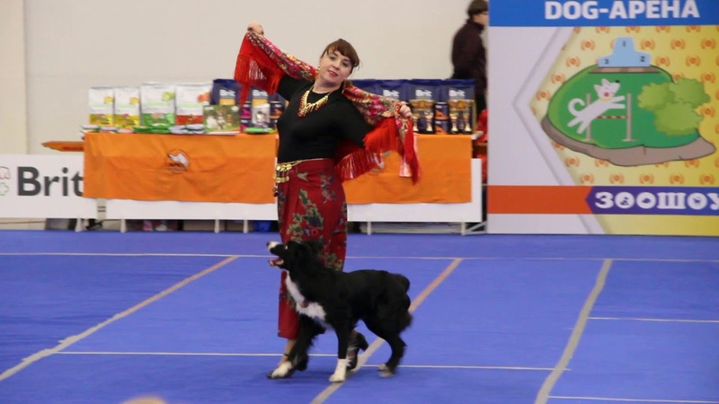 Цыганочка с выходом танец дрессированной собачки Зоошоу экспофорум 2018 Санкт Петербург