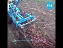 Самодельный комбайн для сбора картофеля