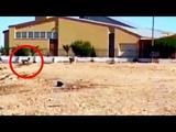 Странное СУЩЕСТВО - Получеловек Полусобака было снято на камеру среди стаи Диких Собак