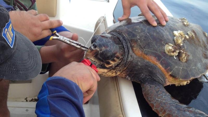 Salvataggio tartaruga caretta caretta