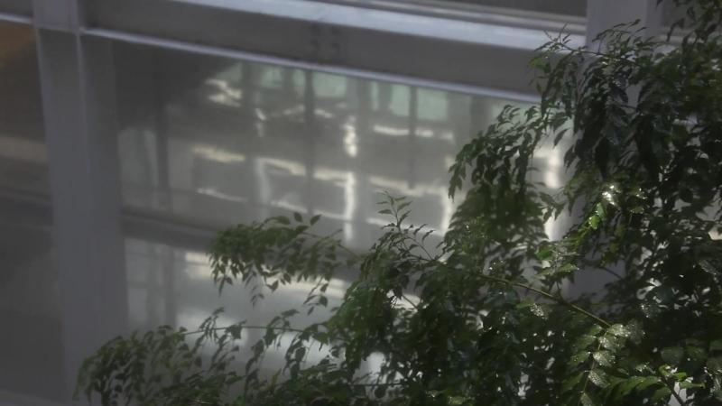 SHIRO TAKATANI, FUJIKO NAKAYA: CLOUD FOREST, 2010