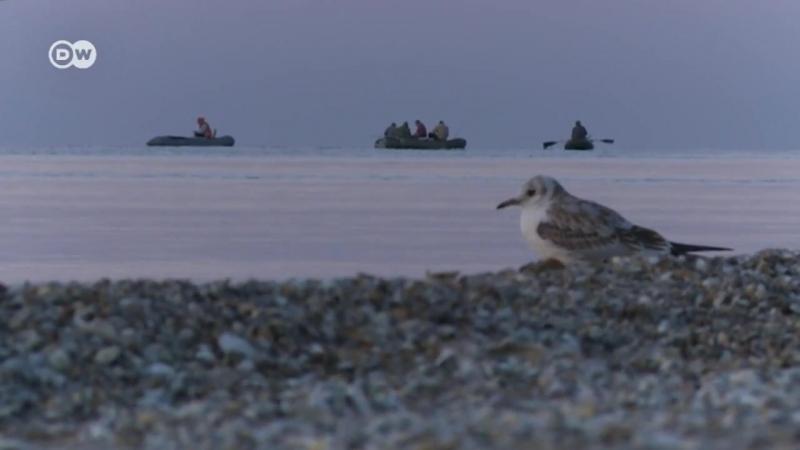 Як війна змінила життя рибалок Маріуполя