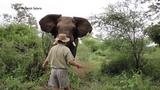 MAN HALTS CHARGING ELEPHANT
