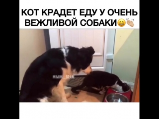 Наглый котик