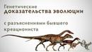 Генетические доказательства эволюции с разъяснениями бывшего креациониста