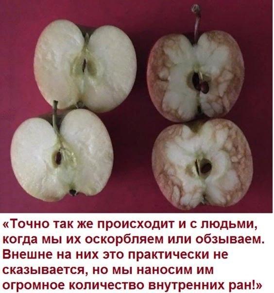 https://pp.userapi.com/c845120/v845120522/915a7/3n-dxJ4jDP0.jpg