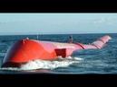 Grande minhoca marinha no mar da Escócia começa a gerar energia
