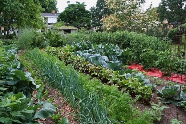 Болезни растений - главное профилактика