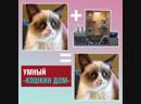 В Китае изобрели умный приют для кошек