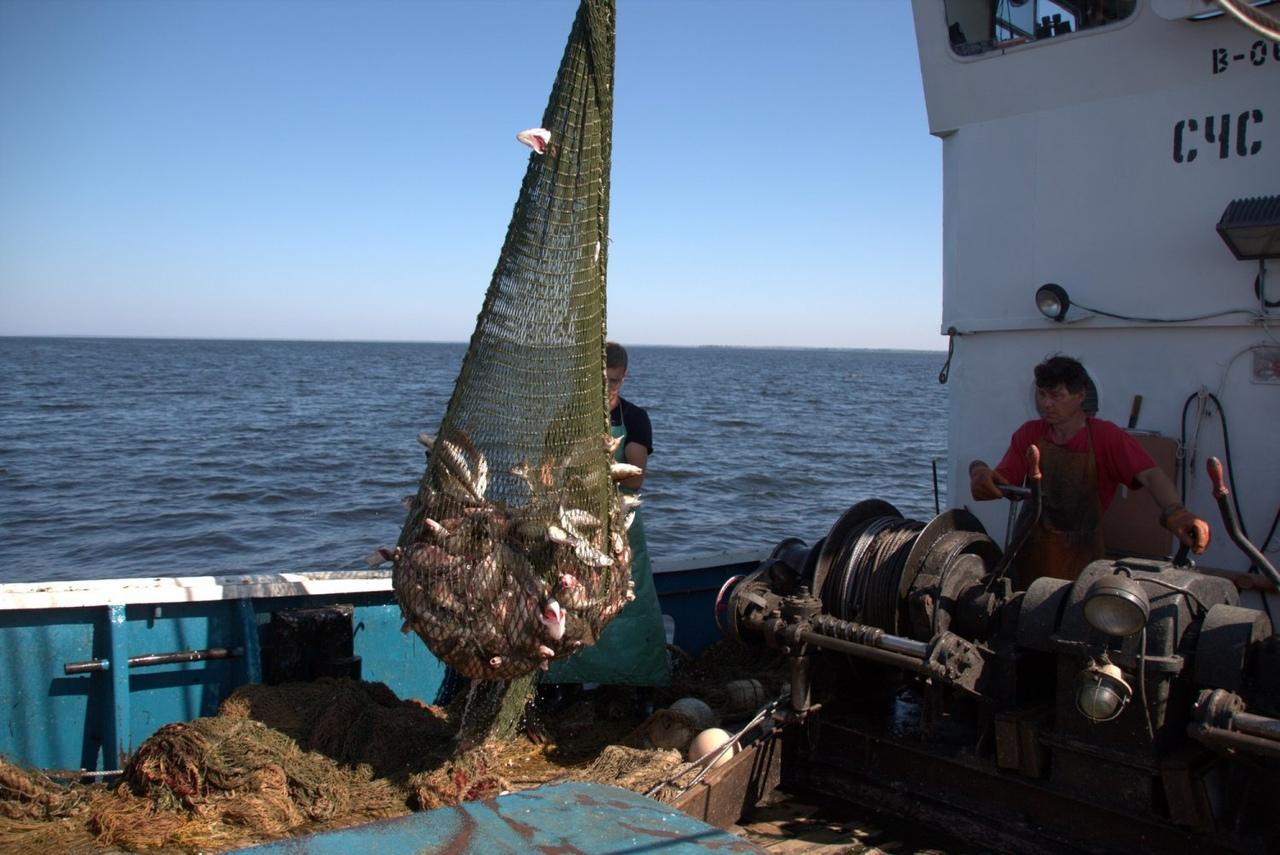 В Красноармейском районе рыбаки поймали занесенную в Красную книгу стерлядь