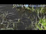 КАРПОВ ПРУД - Арнеево. природа России, наша планета, рыбалка в России - фильмы ДИВЕРА