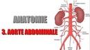 ANATOMIE Gros vaisseaux de l'abdomen 3 AORTE ABDOMINALE