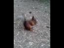 Белка песенки поёт да орешки всё грызет