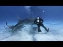 O Terror do Tubarão Tigre (Raro)