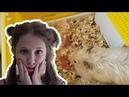 ШОК! ОНА РОДИЛА! Мой Хомяк ВДРУГ РОДИЛ! SHOCK! SHE GAVE BIRTH! My Hamster SUDDENLY gave birth!