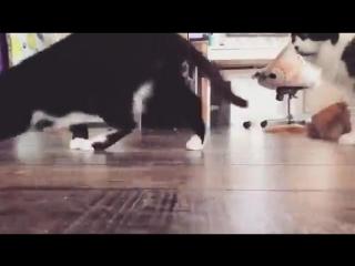 Эксперимент №315 - Кошки_коты и додстер