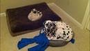 Я РЖАЛ ПОЛ ЧАСА. Смешные Коты и Собаки. ПРИКОЛЫ С ЖИВОТНЫМИ. Cute Cats 126