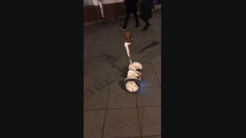 Owl riding a Segway