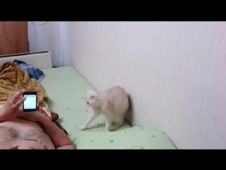 Полный ржач кот патриот слушает гимн России лучшие приколы над животными 2019 года Новинка угар!